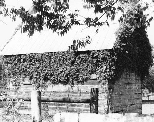 Mulberry-Plantation